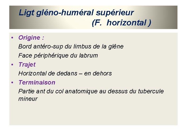 Ligt gléno-huméral supérieur (F. horizontal ) • Origine : Bord antéro-sup du limbus de
