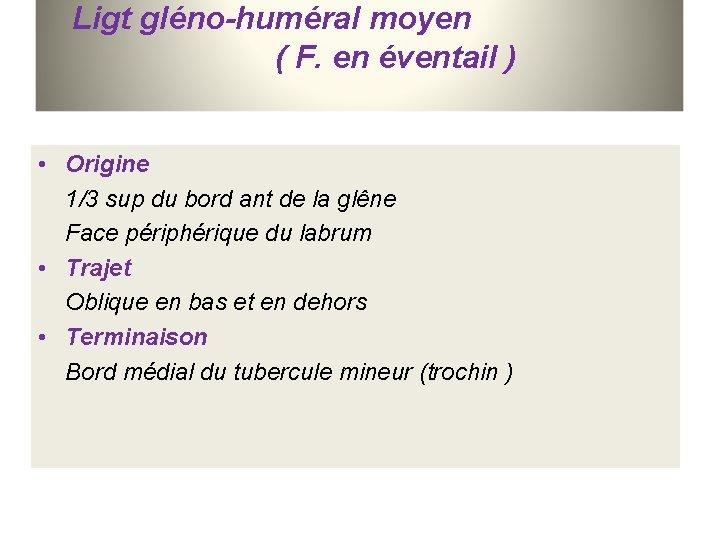 Ligt gléno-huméral moyen ( F. en éventail ) • Origine 1/3 sup du bord