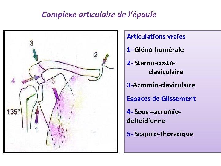 Complexe articulaire de l'épaule Articulations vraies 1 - Gléno-humérale 2 - Sterno-costoclaviculaire 3 -Acromio-claviculaire