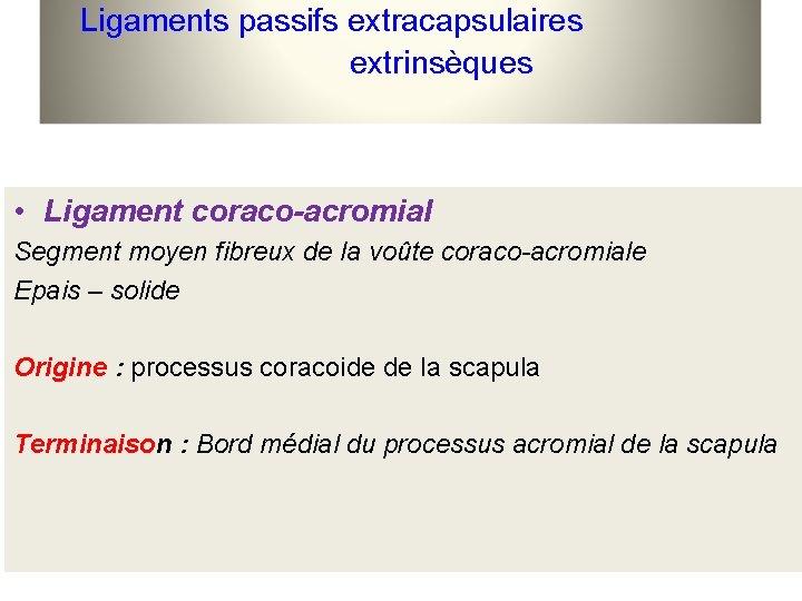 Ligaments passifs extracapsulaires extrinsèques • Ligament coraco-acromial Segment moyen fibreux de la voûte coraco-acromiale