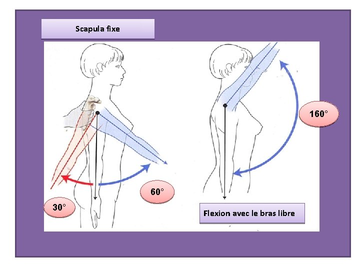 Scapula fixe 160° 30° Flexion avec le bras libre