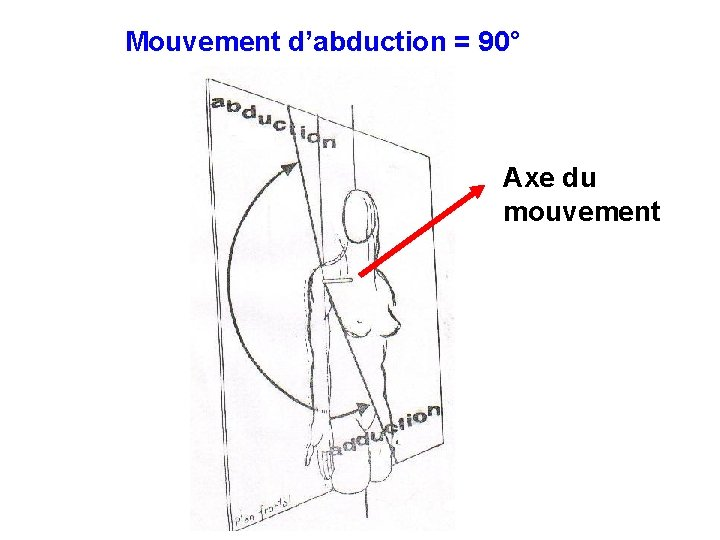 Mouvement d'abduction = 90° Axe du mouvement