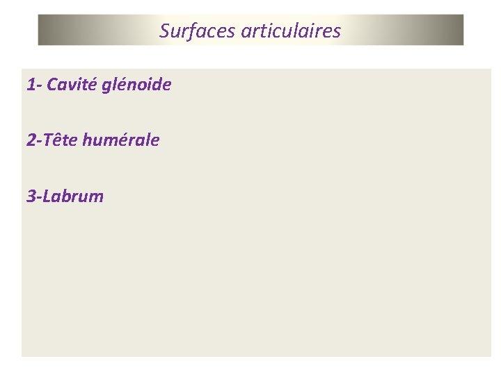 Surfaces articulaires 1 - Cavité glénoide 2 -Tête humérale 3 -Labrum