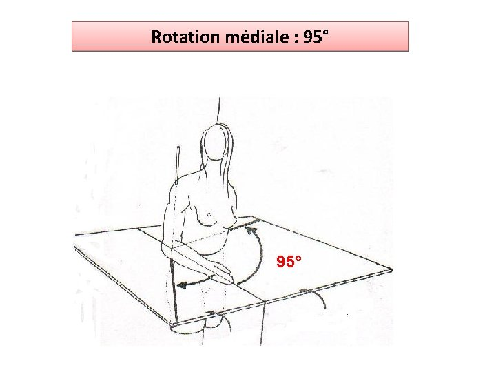 Rotation médiale : 95°