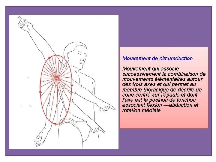 Mouvement de circumduction Mouvement qui associe successivement la combinaison de mouvements élémentaires autour des