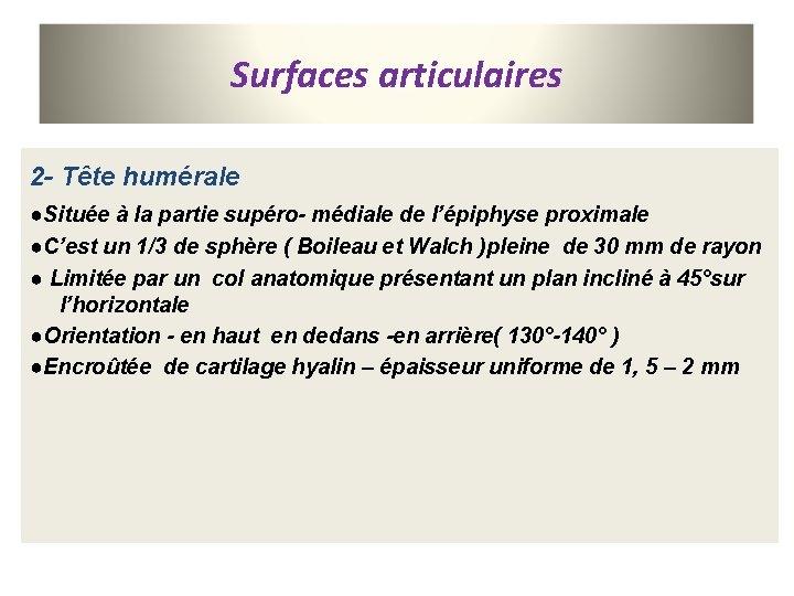 Surfaces articulaires 2 - Tête humérale ●Située à la partie supéro- médiale de l'épiphyse