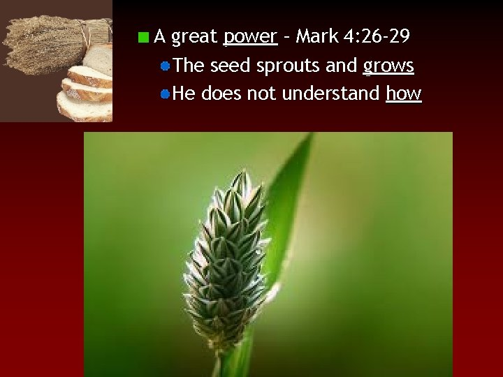 A great power – Mark 4: 26 -29 The seed sprouts and grows He