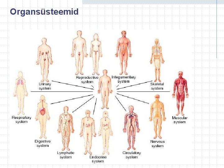 Organsüsteemid