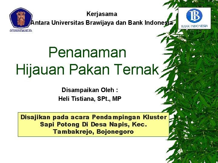Kerjasama Antara Universitas Brawijaya dan Bank Indonesia Penanaman Hijauan Pakan Ternak Disampaikan Oleh :