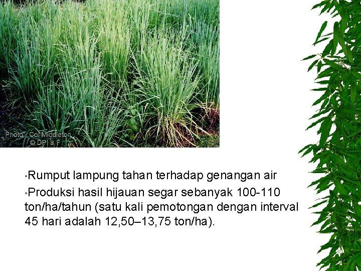• Rumput lampung tahan terhadap genangan air • Produksi hasil hijauan segar sebanyak