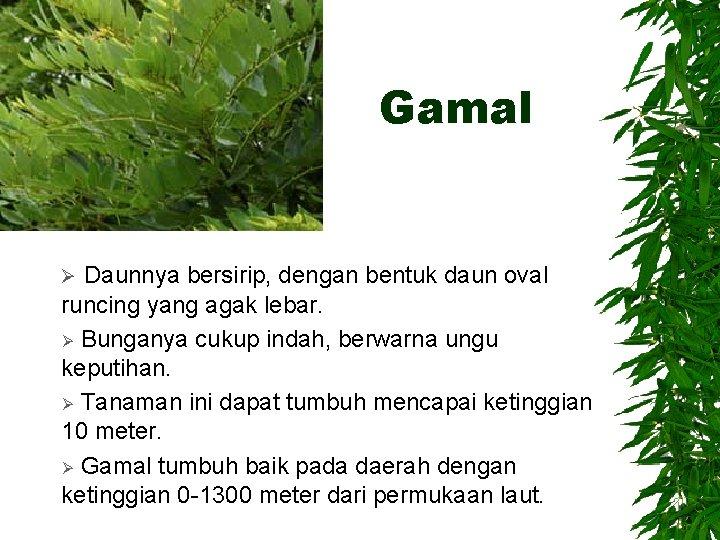 Gamal Daunnya bersirip, dengan bentuk daun oval runcing yang agak lebar. Ø Bunganya cukup