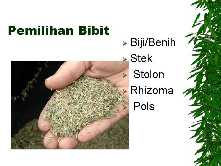 Pemilihan Bibit Biji/Benih Ø Stek Ø Stolon Ø Rhizoma Ø Pols Ø