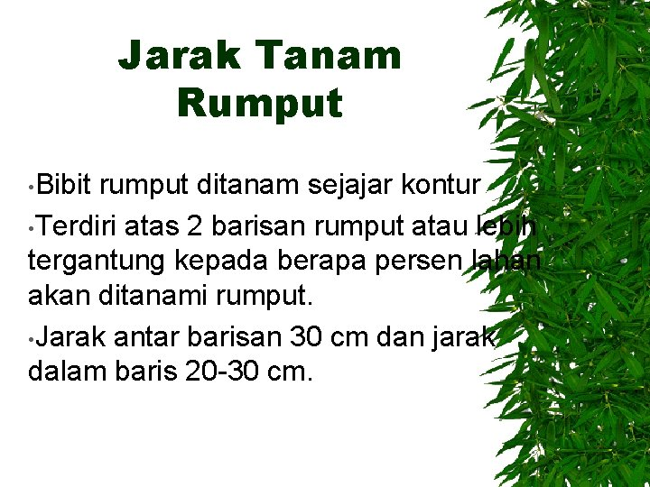 Jarak Tanam Rumput • Bibit rumput ditanam sejajar kontur • Terdiri atas 2 barisan