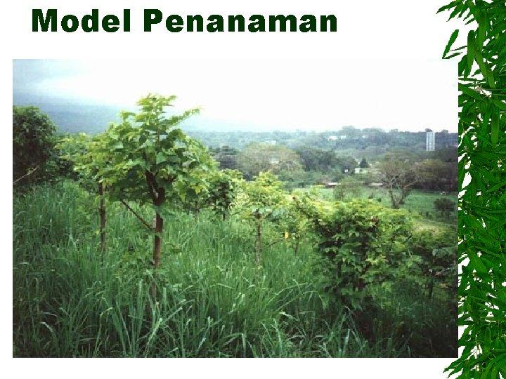 Model Penanaman
