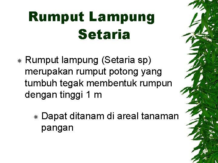 Rumput Lampung Setaria Rumput lampung (Setaria sp) merupakan rumput potong yang tumbuh tegak membentuk