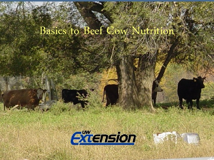Basics to Beef Cow Nutrition Basics to Small Farm Beef Cow Nutrition Adam Hady