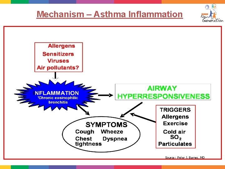 Mechanism – Asthma Inflammation Source: Peter J. Barnes, MD