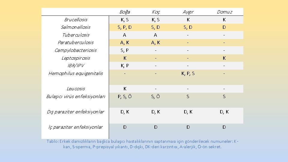 Brucellosis Salmonellosis Tuberculosis Paratuberculosis Campylobacteriosis Leptospirosis IBR/IPV Hemophilus equigenitalis Boğa Koç Aygır Domuz