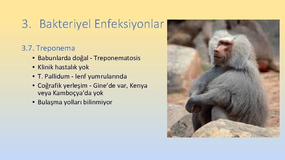 3. Bakteriyel Enfeksiyonlar 3. 7. Treponema Babunlarda doğal - Treponematosis Klinik hastalık yok T.