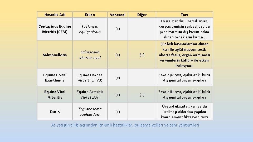 Hastalık Adı Etken Venereal Contagious Equine Metritis (CEM) Taylorella equigenitalis (+) Salmonellozis Salmonella abortus