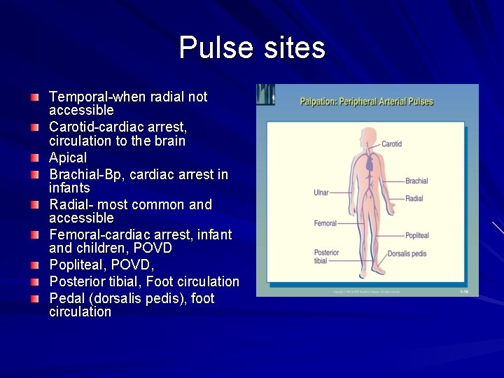 Pulse sites Temporal-when radial not accessible Carotid-cardiac arrest, circulation to the brain Apical Brachial-Bp,