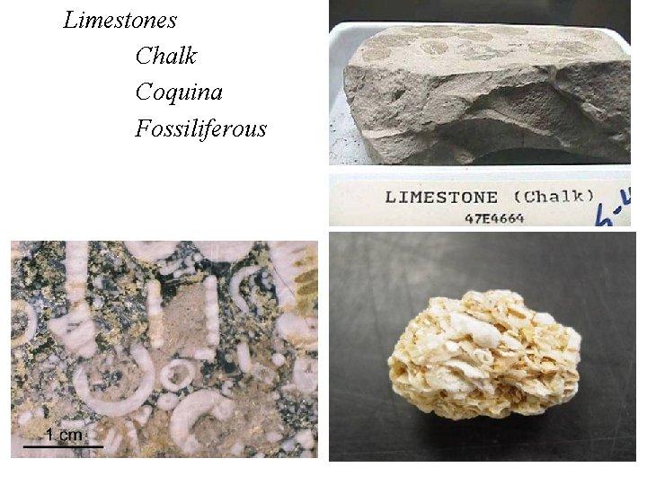 Limestones Chalk Coquina Fossiliferous