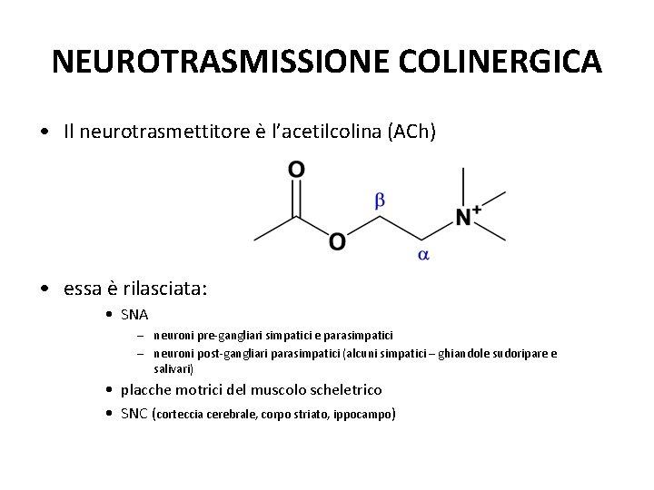 NEUROTRASMISSIONE COLINERGICA • Il neurotrasmettitore è l'acetilcolina (ACh) • essa è rilasciata: • SNA