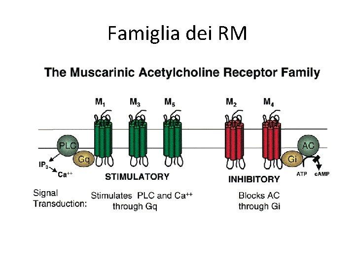 Famiglia dei RM
