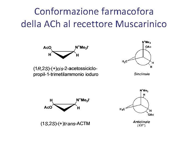 Conformazione farmacofora della ACh al recettore Muscarinico