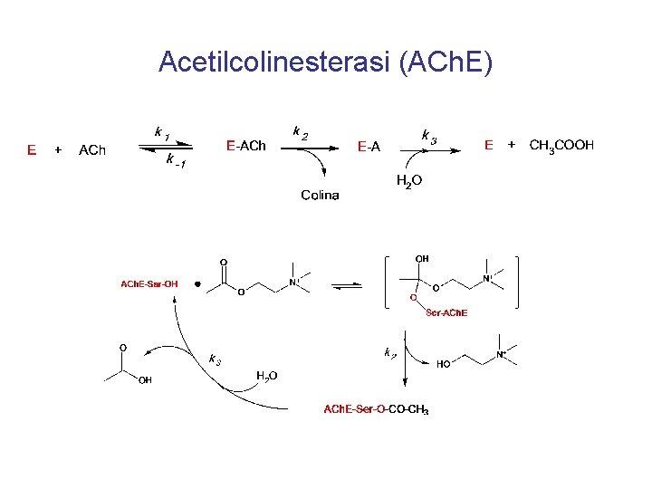 Acetilcolinesterasi (ACh. E)