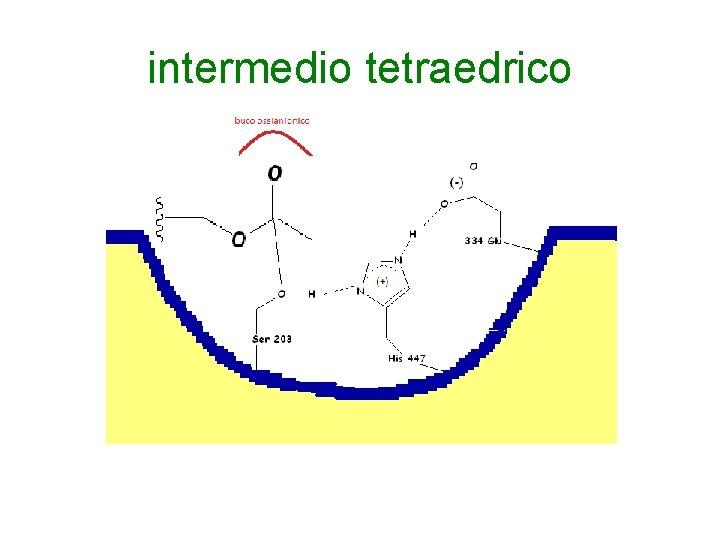intermedio tetraedrico
