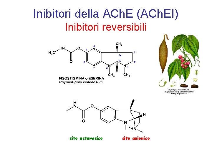 Inibitori della ACh. E (ACh. EI) Inibitori reversibili sito esterasico sito anionico