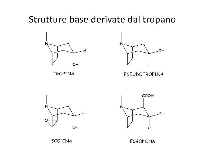 Strutture base derivate dal tropano