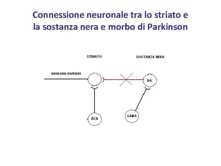Connessione neuronale tra lo striato e la sostanza nera e morbo di Parkinson