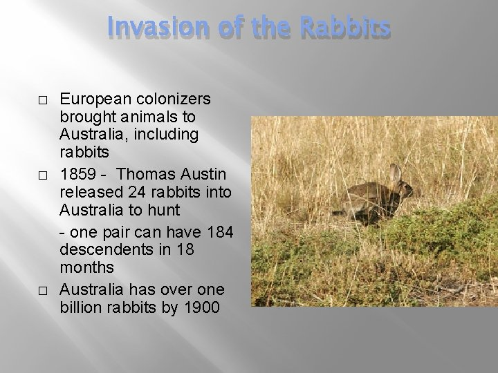 Invasion of the Rabbits � � � European colonizers brought animals to Australia, including