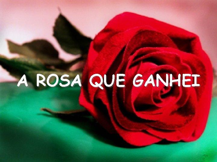 A ROSA QUE GANHEI