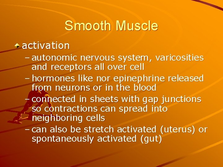 Smooth Muscle activation – autonomic nervous system, varicosities and receptors all over cell –