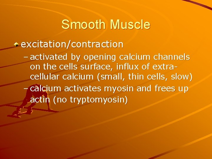 Smooth Muscle excitation/contraction – activated by opening calcium channels on the cells surface, influx