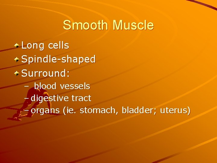 Smooth Muscle Long cells Spindle-shaped Surround: – blood vessels – digestive tract – organs