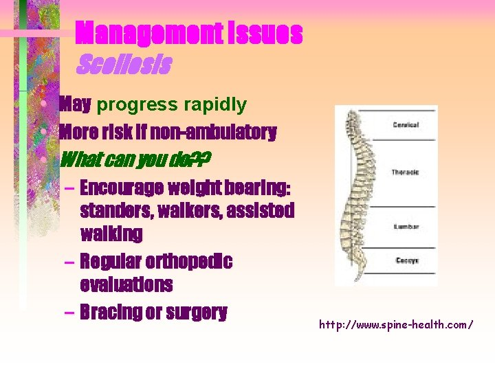 Management Issues Scoliosis • May progress rapidly • More risk if non-ambulatory • What