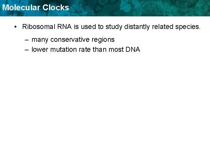 Molecular Clocks • Ribosomal RNA is used to study distantly related species. – many