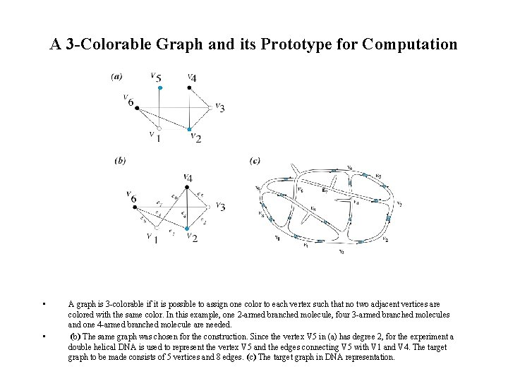 A 3 -Colorable Graph and its Prototype for Computation • • A graph is