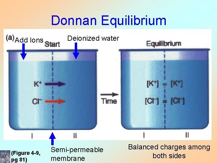 Donnan Equilibrium Add Ions (Figure 4 -9, pg 81) Deionized water Semi-permeable membrane Balanced