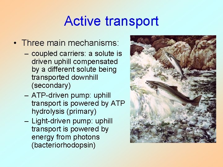 Active transport • Three main mechanisms: – coupled carriers: a solute is driven uphill