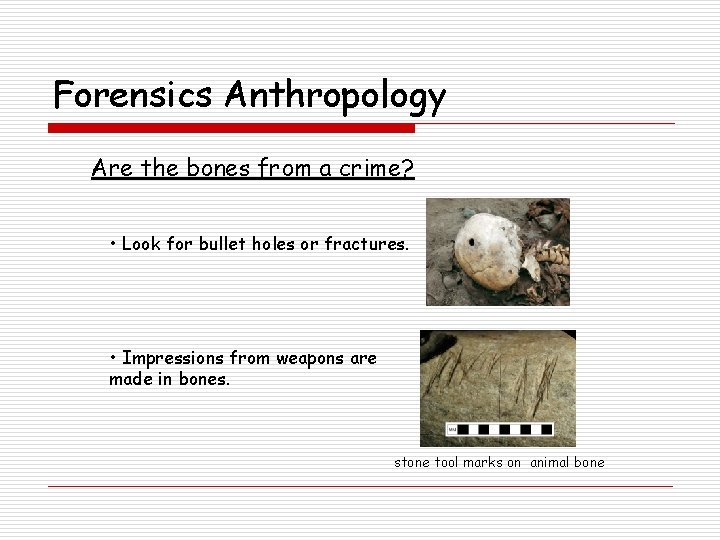 Forensics Anthropology Are the bones from a crime? • Look for bullet holes or