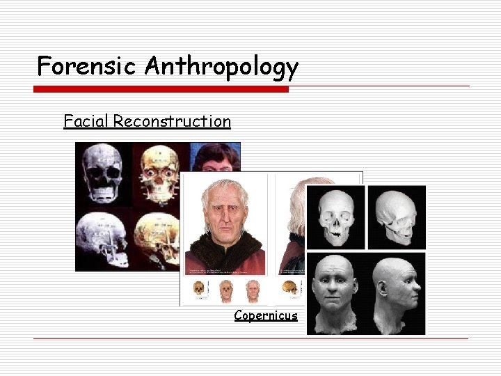 Forensic Anthropology Facial Reconstruction Copernicus