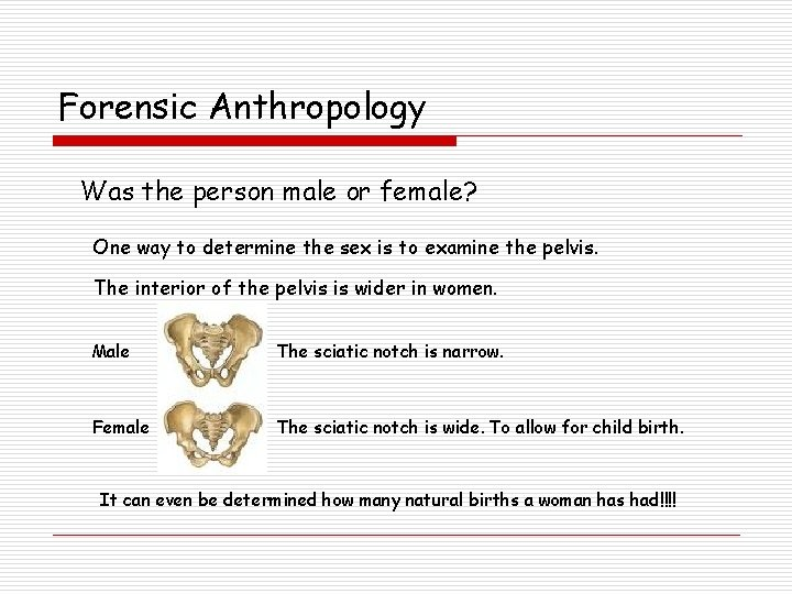 Forensic Anthropology Was the person male or female? One way to determine the sex