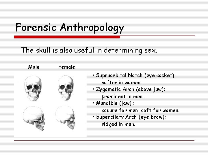 Forensic Anthropology The skull is also useful in determining sex. Male Female • Supraorbital