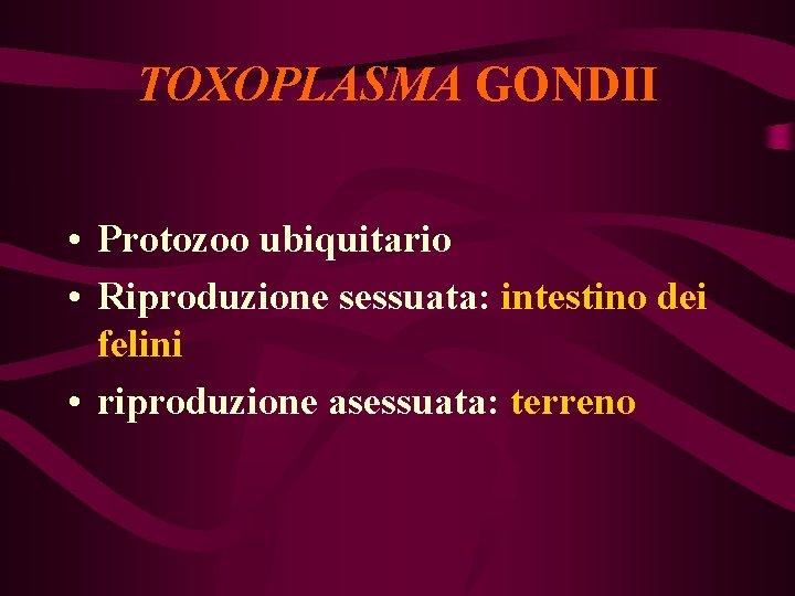 TOXOPLASMA GONDII • Protozoo ubiquitario • Riproduzione sessuata: intestino dei felini • riproduzione asessuata: