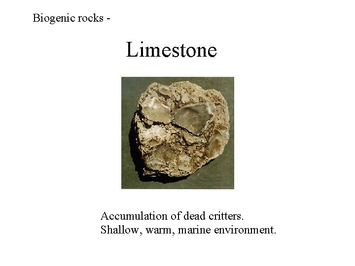Biogenic rocks - Limestone Accumulation of dead critters. Shallow, warm, marine environment.